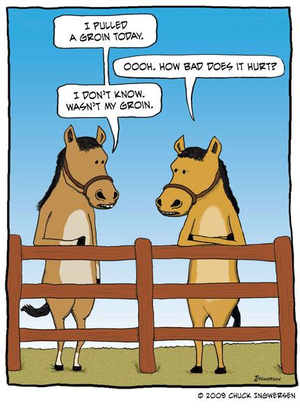 horses-groin